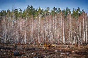 sfondo di deforestazione