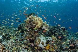 pesci vibranti della barriera corallina foto