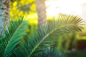 primo piano tropicale della palma foto