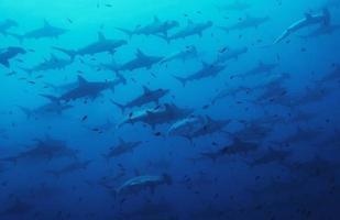 festa degli squali