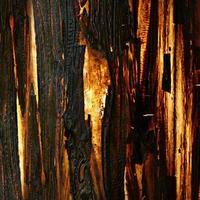 vecchia corteccia d'albero, trama illuminata foto