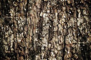 struttura della plancia di legno del grunge foto