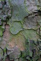 asse di legno in legno sfondo foto