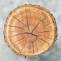 struttura del cerchio di legno