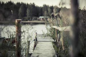 erba svezia in primo piano, lago e pontile 4