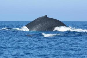 balena indietro foto