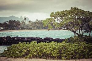 albero del cocco sulla spiaggia sabbiosa in Kapaa Hawai foto