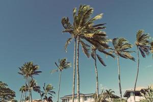 Hawai Maui case sulla spiaggia foto
