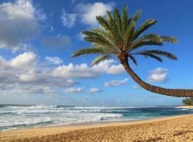 palma in pendenza sulla spiaggia foto