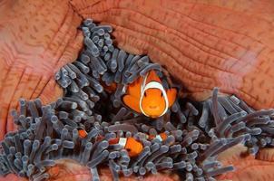 famiglia di pesci foto