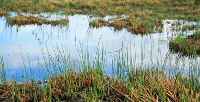 terre bagnate