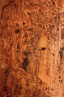 vecchio blackground di legno foto