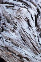 trama di sfondo legno marrone vecchio foto