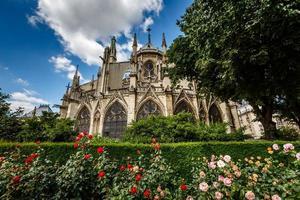 cattedrale di Notre Dame de Paris con rose rosse e bianche