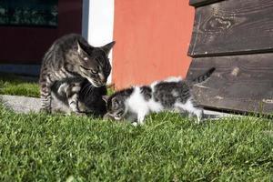 gatto di famiglia foto