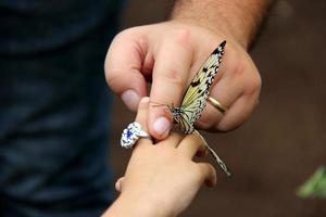 batterfly foto