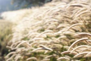 sfocatura del campo di erba foto