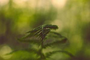 felce verde morbido vintage foglie su sfondo sfocato con bokeh