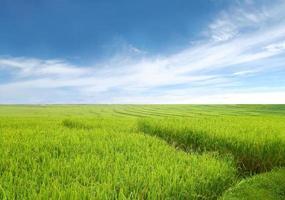 bellissimo campo di riso e cielo blu foto