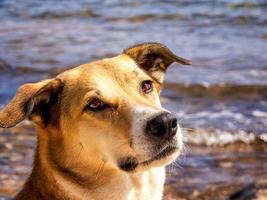 ritratto di cane foto