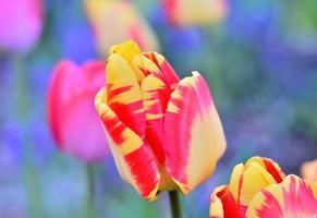 bellissimo ritratto di fiori