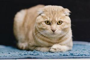 ritratto di gatto foto