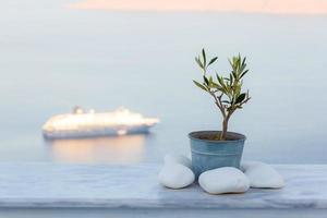 pentola con albero di olio d'oliva decorativo in balcone foto