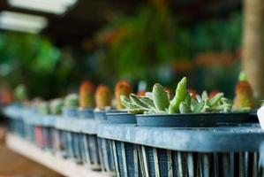 ritratti di cactus foto