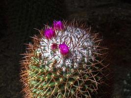 alto vicino del cactus foto