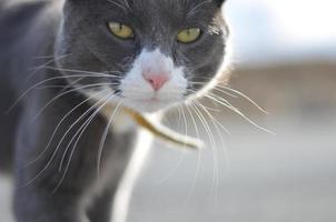primo piano del gatto