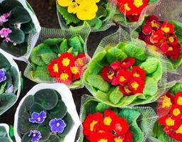 fiori del primo piano