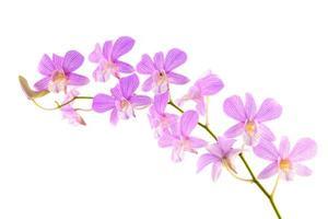 fiore di orchidea foto