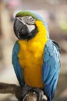 ritratto di macaw foto