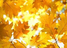 ramo di un albero con foglie d'autunno.