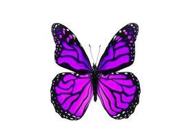 farfalla viola brillante isolata su fondo bianco
