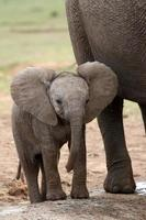bambino elefante africano