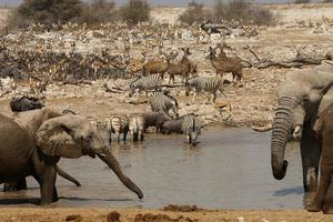 okaukuejo waterhole, parco nazionale di etosha, namibia foto