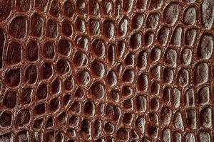 pelle di serpente. foto