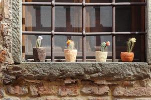 certaldo (firenze), piante in vaso foto