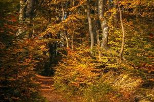 sentiero nel bosco autunnale foto