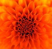 fiore del primo piano