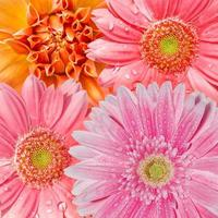 sfondo di fiori