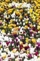 giardino floreale foto