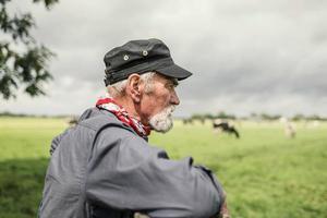 contadino anziano che controlla le sue mucche in un pascolo foto