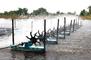 occupazione pesci d'acqua dolce foto