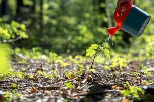 mano maschio che innaffia una plantula nella foresta foto