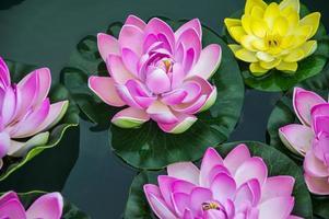 piccoli fiori di loto artificiali foto