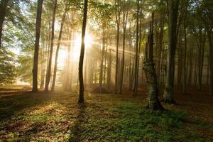 alberi forestali autunnali. Sfondi di natura verde e legno del sole.