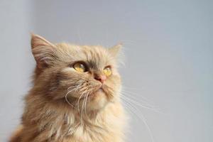 occhi di gatto foto