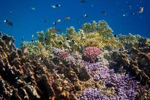 mondo di coralli colorati